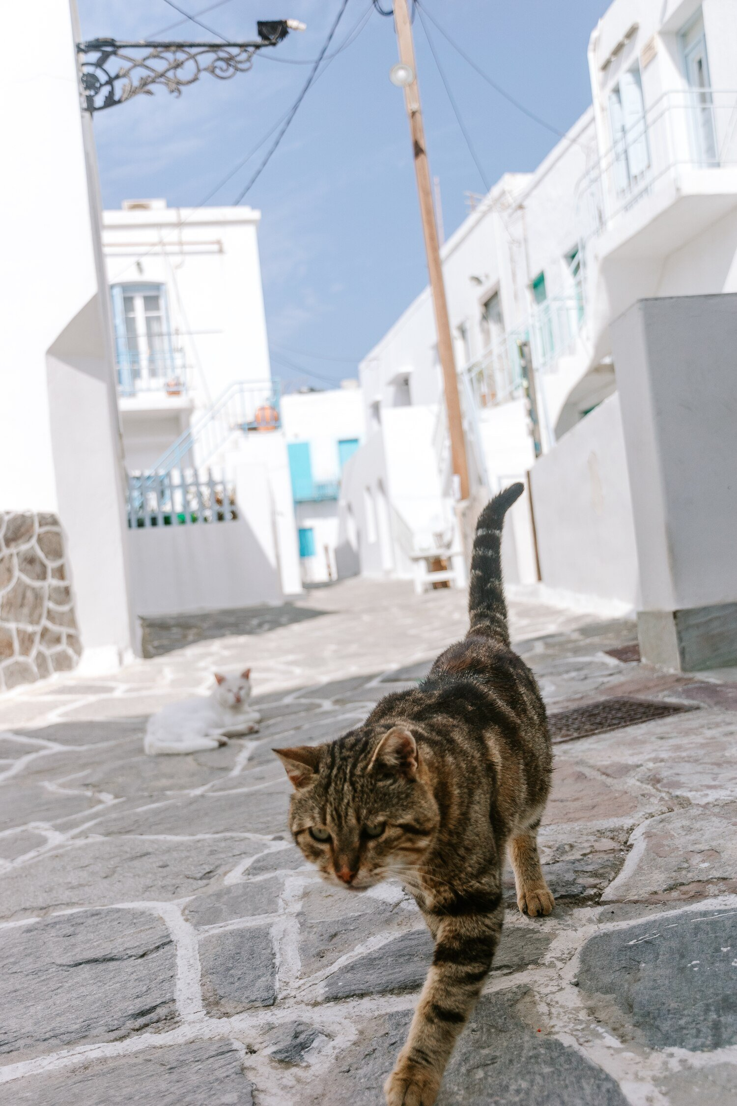 A cat in the back streets of Plaka on the incredible greek island Milos