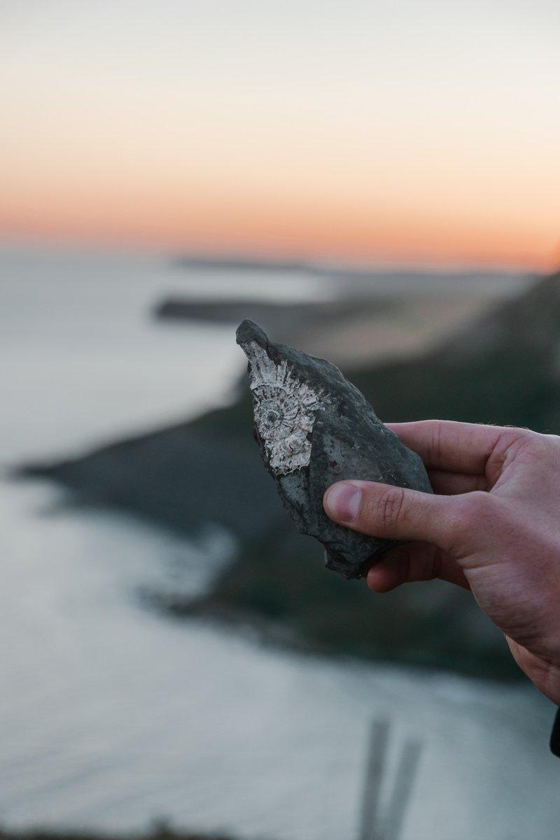 A Jurassic Coast Fossil at Chapmans Pool